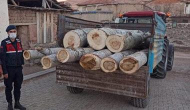 Yerköy'de ağaç hırsızı göz altına alındı