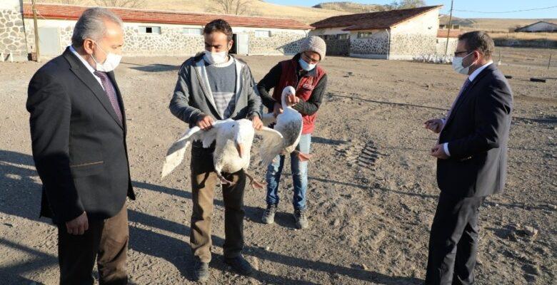 Yerköy'de 600 yerli ırk kaz ıslah edilmek için dağıtıldı
