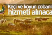 Ceylanpınar Tarım İşletmesi Müdürlüğü çobanlık hizmeti alacak
