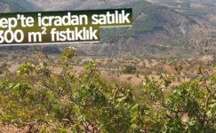 Gaziantep'te icradan satılık 52.300 m² fıstıklık