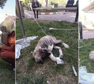 Yerköy Devlet hastane personeli, hasta köpeği serum takarak iyileştirdi